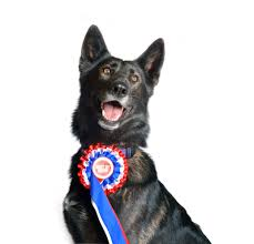 Go For It: Homeopathy for Show dogs needing extra zip
